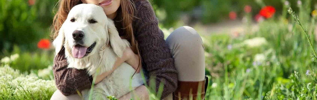 5 Easy To Follow Tips When Taking Care Of Your Pet Dog